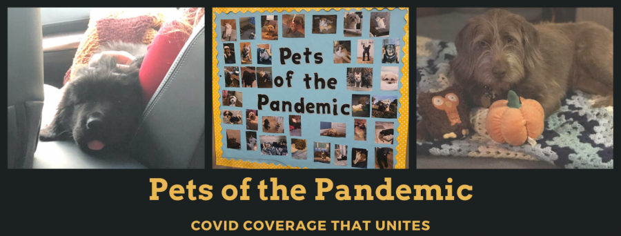 Pets of the Pandemic: How a COVID Chronicles Column Took Off at Wantagh High School